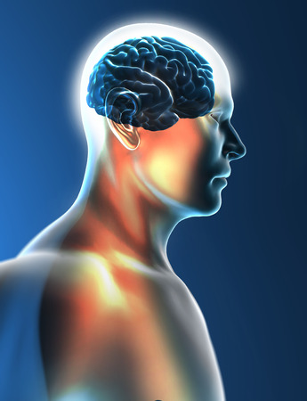Brain neurons synapse head profile photo