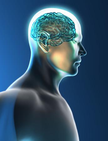 Brain neurons synapse head profile