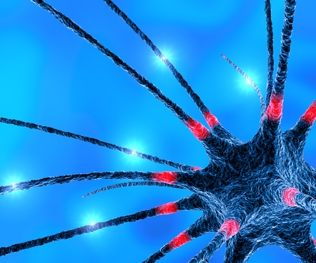 Neurons synapse brain functions