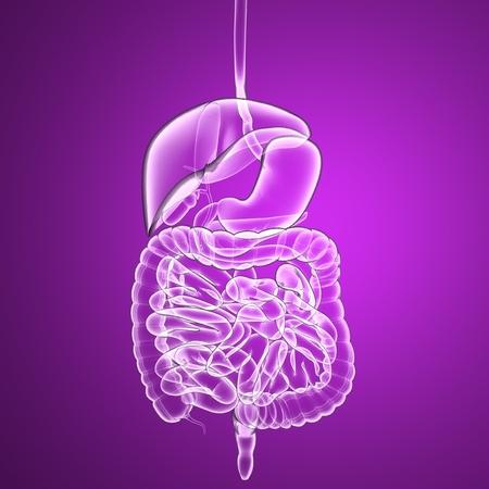 Digestive system, internal organs, human body x-ray photo
