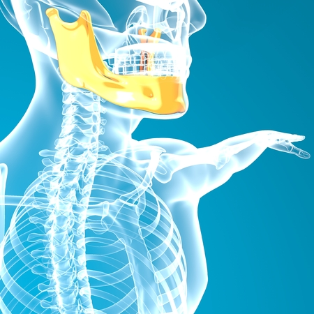 rib cage: Jaw bone head x-ray