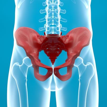 coccyx pain: Pelvis human body x-ray
