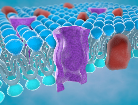 Structure of the plasma membrane of a cell Stock Photo