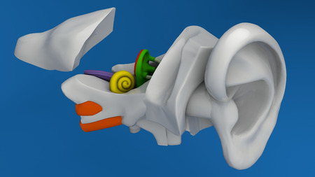 Human ear anatomy on blue background