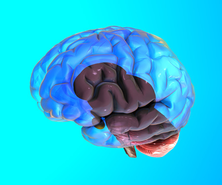 lobe: Human brain structure on blue background