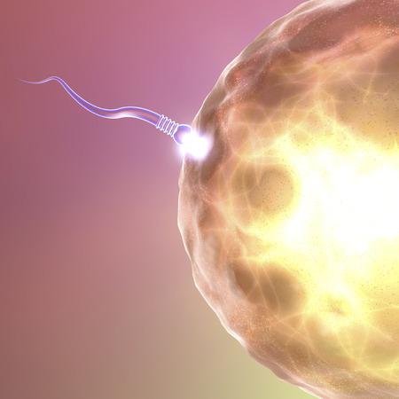 relaciones sexuales: Óvulo y el espermatozoide Concepción Foto de archivo