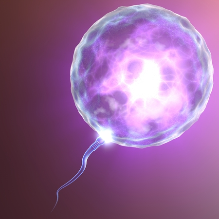 sperm cell: Conception ovum and sperm Stock Photo