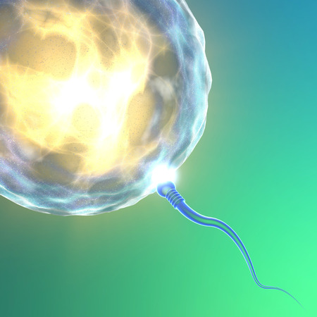 Conception ovum and sperm Stok Fotoğraf