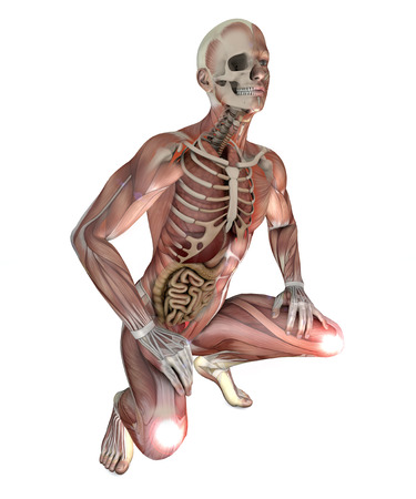 Male body with skeletal muscles and organs Stock Photo