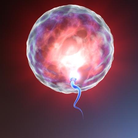 relaciones sexuales: �vulo y el espermatozoide Concepci�n Foto de archivo