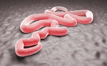 contagion: Ebola virus laboratory contagion danger epidemic Stock Photo