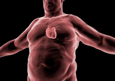 anatomy: cuerpo humano, gordo, el coraz�n y la anatom�a, la radiograf�a