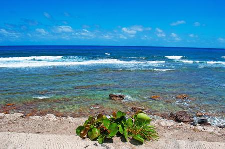 fond: Grand Fond beach, holidays, St Barth, St. Barths, Saint-Barthlemy, French West Indies, French Antilles, Caribbean, sea
