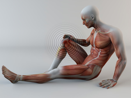 leg muscle fiber: Human body, knee pain, muscles, muscle tear