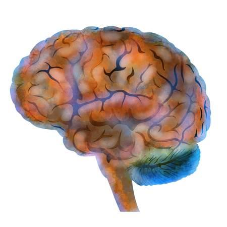 brain disease: Human brain, mind illustration