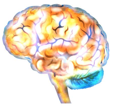 free the brain: Human brain, mind illustration