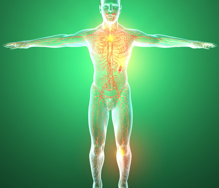 Lymphatic system, the human body, man, Stock Photo