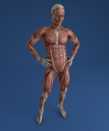 musculoskeletal: 3d person in front view with muscles Stock Photo