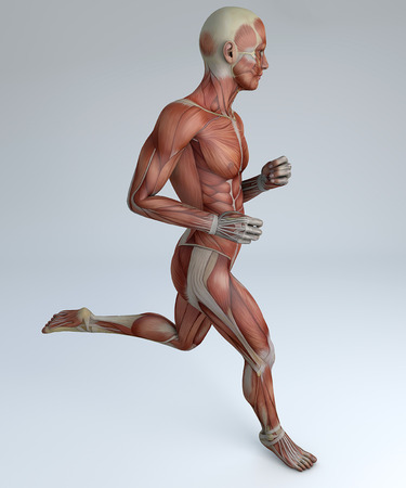 involuntary: 3d person running with muscles Stock Photo