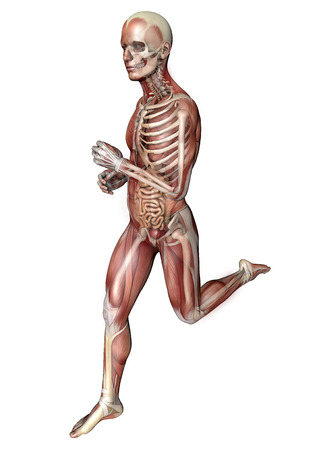 3d person running with muscles and internal organs in transparency Stock Photo