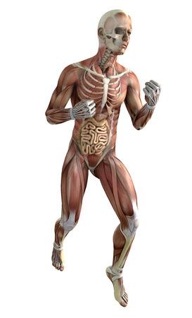 3 ª persona en la lucha posa con los músculos y los órganos internos en la transparencia Foto de archivo