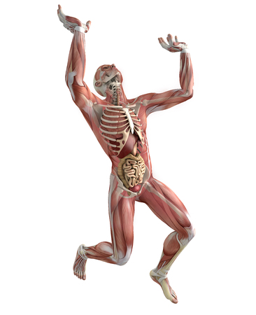 involuntary: 3d person in the act of lifting a weight, with muscles and internal organs in transparency