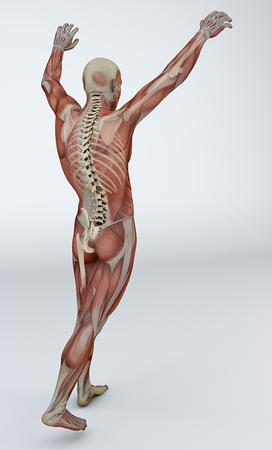 contracture: muscle pain, x-ray, the spine skeleton, backache