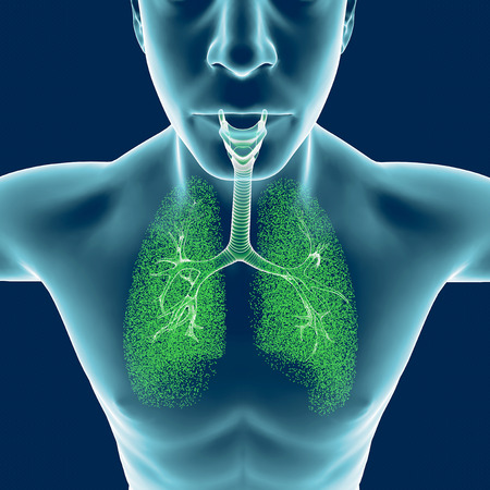 Bronchi, the human body, man, lungs, inflammation. 3d rendering Stock Photo