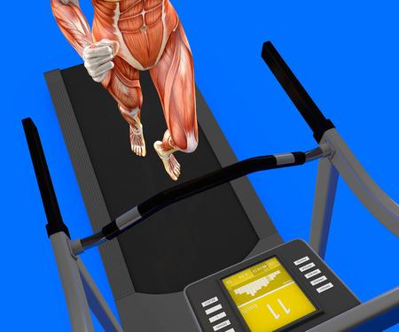 Human body, woman running, muscular system, treadmill, gym, gymnastics, 3d rendering Stock Photo