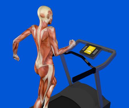 Der Menschliche Körper, Muskelsystem, Person, Das Verdauungssystem ...