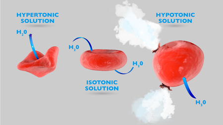 Cell osmosis, cell in isotonic solution, cell in hypertonic solution, cell in hypotonic solution, exchange of fluxes