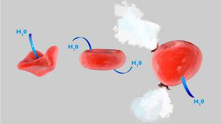 Celosmose, cel in isotone oplossing, cel in hypertonische oplossing, cel in hypotonische oplossing, uitwisseling van fluxen