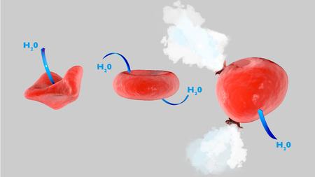 Osmose cellulaire, cellule en solution isotonique, cellule en solution hypertonique, cellule en solution hypotonique, échange de flux Banque d'images - 79785893