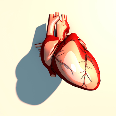 systemic: The heart is a muscular organ, which pumps blood through the blood vessels of the circulatory system, long shadow, 3d rendering Stock Photo