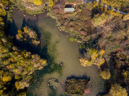 Nature and landscape: aerial view of a forest and a naturalistic path, autumn leaves, greenery and trees, outdoor walks, wildlife. Foliage