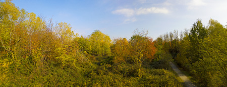 Nature and landscape: aerial view of a forest and a naturalistic path, autumn leaves, greenery and trees, outdoor walks, wildlife. Foliage.