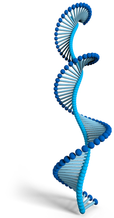 DNA, Deoxyribonucleic acid is a thread-like chain of nucleotides carrying the genetic instructions used in the growth, development and functioning of the known living organisms and many viruses. DNA helix Archivio Fotografico