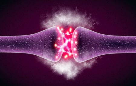 Synapse ist eine Struktur, die es einem Neuron (oder einer Nervenzelle) ermöglicht, ein elektrisches oder chemisches Signal an ein anderes Neuron oder an die efferente Zielzelle weiterzuleiten. nervöses System