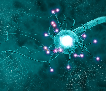 Synapse is a structure that permits a neuron (or nerve cell) to pass an electrical or chemical signal to another neuron or to the target efferent cell. nervous system