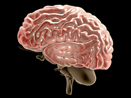 Section of a brain seen in profile, parts of the brain. Degenerative diseases, Parkinsons, synapses, neurons, Alzheimers, 3d rendering Stock Photo