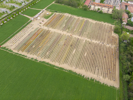 Aerial view of a field of tulips, multicolored variety of flowers. Arese, Milan, Italy. Italian tulips.
