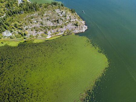 Aerial view of a motor boat sailing along an area full of water lilies. Untouched nature in Lake Scutari, Skadar, National Park in Montenegro