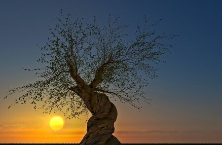 Environment, nature reclaims its spaces: a Pinus longaeva tree at sunset. Lawn and pine tree with twisted trunk, backlight and silhouette. The new environmental challenge after the coronavirus pandemic, covid-19. 3d render