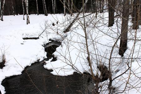 streamlet: forest stream
