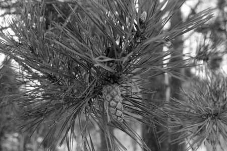 pinecone: Bump