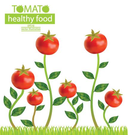 tomate de arbol: Ilustración del árbol de tomate vector Vectores