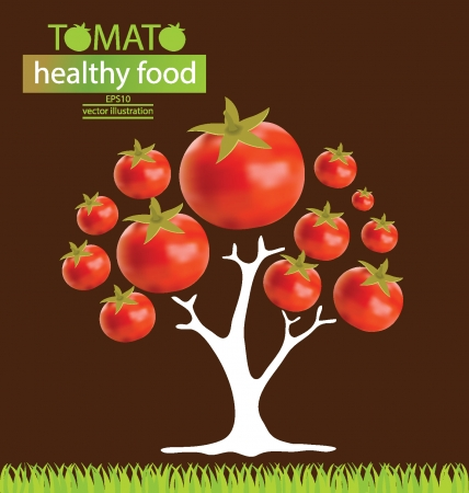 tomato  tree vector illustration  Vector