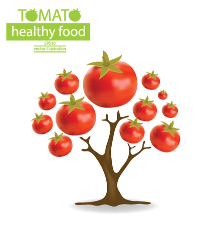 greengrocer: tomato  tree vector illustration  Illustration