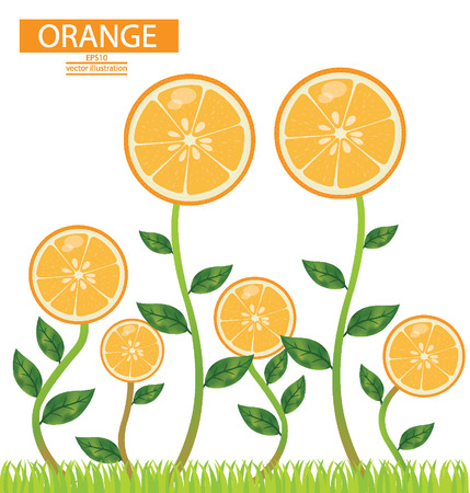 leaved: Tree orange vector illustration