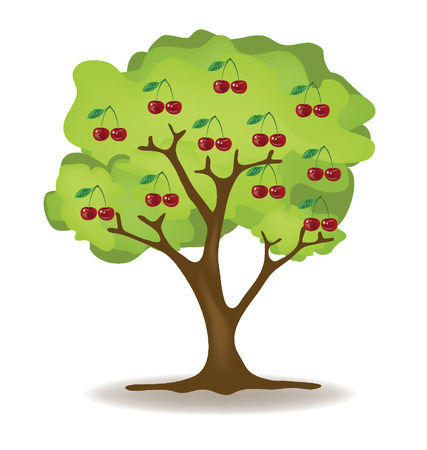 leaved: Cherry  Tree vector illustration